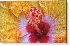 Magical Hibiscus  Acrylic Print