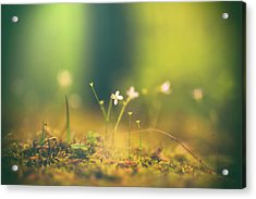 Acrylic Print featuring the photograph Magical Moment by Shane Holsclaw