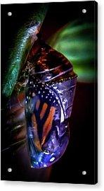 Magical Monarch Acrylic Print by Karen Wiles