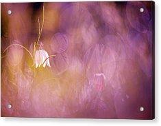 Magical Mood Acrylic Print