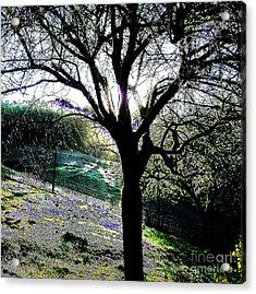 Magical Morning Acrylic Print by JoAnn SkyWatcher