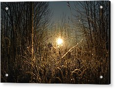 Magical Sunrise Acrylic Print by Dacia Doroff