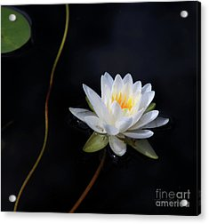 Acrylic Print featuring the photograph Magical Water Lily by Michelle Wiarda