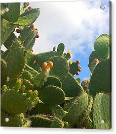 Magnificent #cactus With New Buds And Acrylic Print