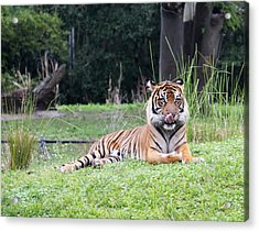 Acrylic Print featuring the photograph Magnificent Creature by Vadim Levin