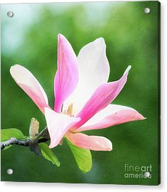 Magnificent Daybreak Magnolia At Day's End Acrylic Print