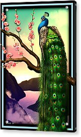 Magnificent Peacock On Plum Tree In Blossom Acrylic Print