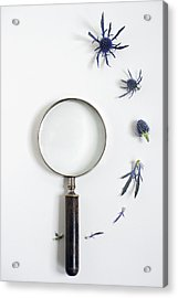 Magnifying Glass And Blue Thistle Acrylic Print