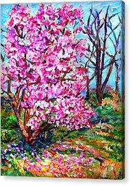 Magnolia - Early Spring Acrylic Print by Laura Heggestad
