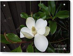 Magnolia 3 Acrylic Print