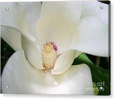 Magnolia Acrylic Print by Addie Hocynec