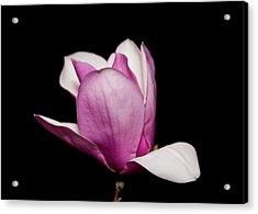 Magnolia At Night Acrylic Print by Gwen Vann-Horn