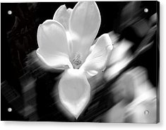 Magnolia Black And White Abstract Acrylic Print