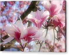 Magnolia Blossoms Acrylic Print by Sandy Keeton