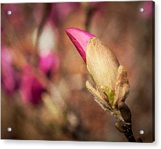 Acrylic Print featuring the photograph Magnolia Bud Artified by David Coblitz