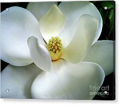 Magnolia Elegance Acrylic Print by Patricia L Davidson