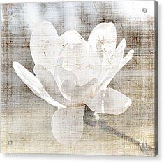 Magnolia Flower Acrylic Print by Elena Elisseeva