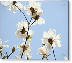 Magnolia Flowers White Magnolia Tree Flowers Art Spring Baslee Troutman Acrylic Print by Baslee Troutman