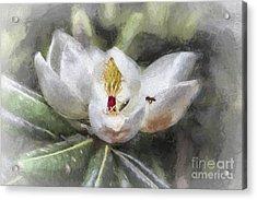 Magnolia Harvest Acrylic Print
