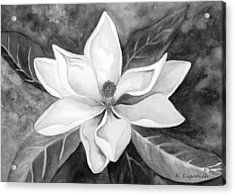 Magnolia In Black And White Acrylic Print by Kerri Ligatich