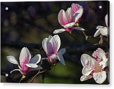 Magnolia Acrylic Print by Jerry LoFaro