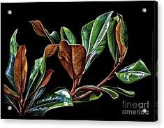 Magnolia Leaves Acrylic Print by Walt Foegelle