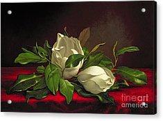 Magnolia Acrylic Print by Martin Johnson Heade