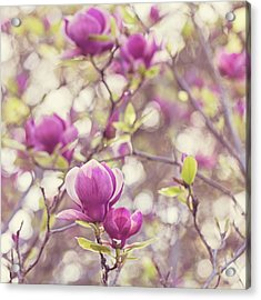 Acrylic Print featuring the photograph Magnolia by Melanie Alexandra Price