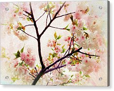 Acrylic Print featuring the photograph Asian Cherry Blossoms by Jessica Jenney