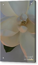 Moody Magnolia  Acrylic Print