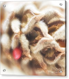 Acrylic Print featuring the photograph Magnolia Seedpod by Elena Nosyreva