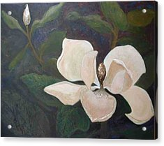 Magnolia Spring Acrylic Print by Win Peterman