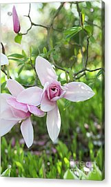 Acrylic Print featuring the photograph Magnolia Star Wars Flower by Tim Gainey