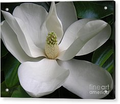 Magnolia Taking In The Light Acrylic Print by Lucyna A M Green