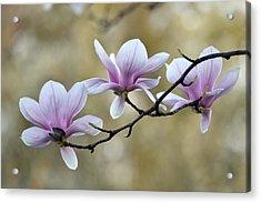Magnolia Trio Acrylic Print