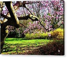 Magnolias And Forsythias Acrylic Print by Susan Savad