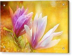 Magnolias Acrylic Print by Elaine Manley