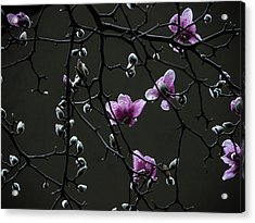 Magnolias In Rain Acrylic Print by Rob Amend