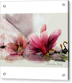 Magnolien .... Acrylic Print by Jacqueline Schreiber