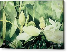 Magnolium Opus Acrylic Print by Elizabeth Carr
