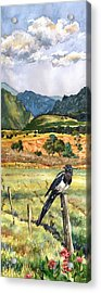 Magpie Acrylic Print by Anne Gifford