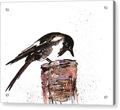 Magpie On A Stump Acrylic Print