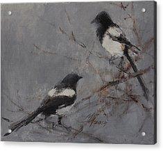 Magpies Acrylic Print