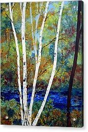 Maine Birch Stream Acrylic Print by Laura Tasheiko