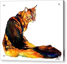 Maine Coon Cat Portrait Acrylic Print