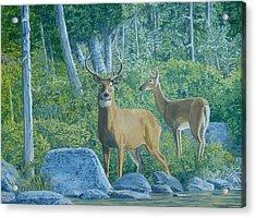 Maine Deer Acrylic Print by Lee Thomason