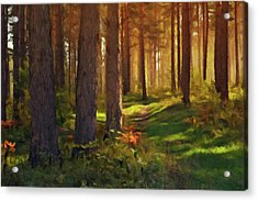 Acrylic Print featuring the photograph Maine Forest Sunset by David Dehner