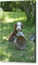 Maisie With Basket Acrylic Print by Mark Alan Perry