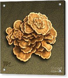 Maitake Mushroom Acrylic Print by Marshall Robinson