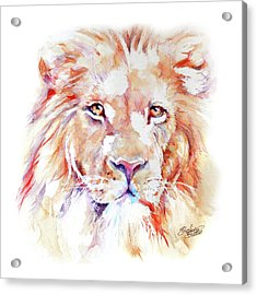 Majestic African Lion Acrylic Print by Stephie Butler